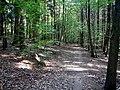 Im Wald bei Magstadt - panoramio.jpg