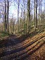 In Ditcham Woods - geograph.org.uk - 354146.jpg