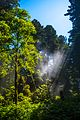 In the California redwood forests of N Calif. on Hwy 101 - sun rays in the fog (11410840326).jpg