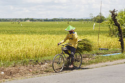 Indonesia Farmer-on-a-bicycle-01.jpg