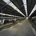 Interieur overzicht koeienstal - Zeewolde - 20410317 - RCE.jpg
