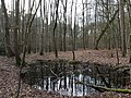 Intermittent Pool in the Spandauer Forst.jpg