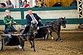 Iowa State Fair '18 (31396921287).jpg