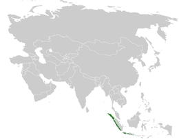 Ixos virescens distribution map.png