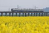 与田浦菜の花祭