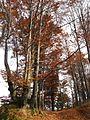 Jablanik - zapadna Srbija - mesto Debelo brdo - Na putu ka vrhu Jablanika - Bukova šuma u jesen 8.jpg