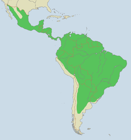 Rozšíření jaguára