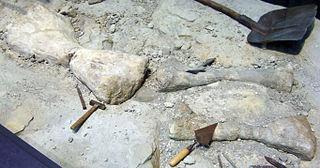 <i>Janenschia</i> genus of reptiles (fossil)