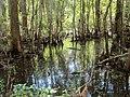 Jean LaFitte - swamp.jpg