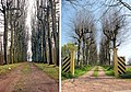 Jelsum, Dekemastate hist. aanleg lindelaan 1980-2009 RM514008.jpg