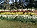 Jheel park Sarojiningr, Delhi, blooming flowers.jpg