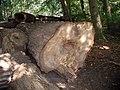 Köln-Lindenthal-Stadtwald-Forstarbeiten.JPG