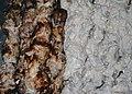Kabab gerash 1.jpg