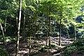 Kaltbrunnental - panoramio (4).jpg