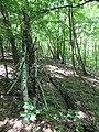 Kaniv Nature Reserve (May 2018) 20.jpg