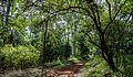 Karura Forest Nairobi 03.JPG