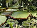 Kew Gardens 005.JPG