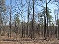Kings Mountain National Military Park - South Carolina (8557804005) (2).jpg