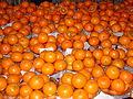Kinnow fruits.JPG