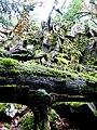 Kirschweiler, Naturschutzgebiet Silberich – Kirschweiler Festung - panoramio.jpg