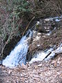 A small waterfall surrounded by bushes, rocks and leaf-strewn ground.