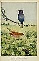 Knowing birds through stories (6298879914).jpg