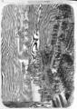 L'Illustration - 1858 - 116.png