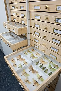 Lincoln University Entomology Research Collection Entomology collection in New Zealand