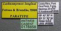 Lachnomyrmex longinoi casent0178858 label 1.jpg