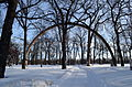 Laminated timber arch replica of original roof support of Rainbow Stage in Kildonan Park in Winnipeg Manitoba.JPG