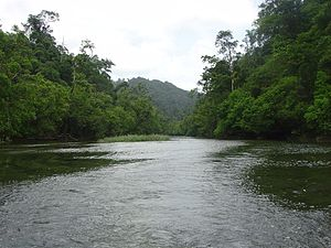 Mergui Archipelago - River on Lanbi Kyun