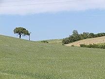 Toscana-Øvrige vigtige byer-Fil:Landschaft Toscana