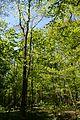 Landschaftsschutzgebiet Gütersloh - Isselhorst - Wald an der Lutter (1).jpg