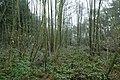 Landschap De Stroopers te Kemzeke - 372054 - onroerenderfgoed.jpg