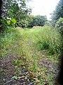 Lane near Twemlow Green - geograph.org.uk - 493155.jpg