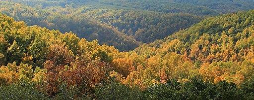 Late autumn on mount Cholomontas