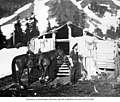 Lawrence Lindsley and horse at miners' cabin, Ptarmigan Park, near Esther Mines, June 1900 (LL 954).jpg