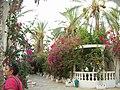 Le Saharien qui reste pour moi le premier amour pour les fleurs du désert, Septembre 2007 - panoramio.jpg