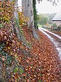 Leaf litter - geograph.org.uk - 1575889.jpg