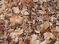 Leaves - panoramio - Hänsel und Gretel.jpg