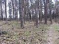 Lentvario sen., Lithuania - panoramio (70).jpg