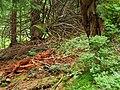 Lesom po žltej turistickej značke - panoramio.jpg