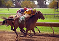"Lexington Kentucky - Keeneland Race Track ""12 feet off the ground"" (2144485577) (2).jpg"