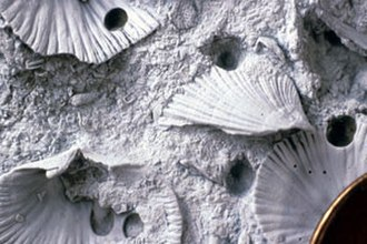 Bioerosion - Image: Liberty Borings