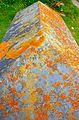 Lichen (2416355541).jpg
