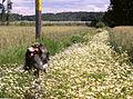 Lindhov landskap 2007a.jpg