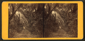 Live Oak Avenue, Bonaventure, from Robert N. Dennis collection of stereoscopic views 5.png