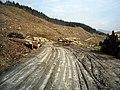 Log Piles in Ardgartan Forest - geograph.org.uk - 1285802.jpg