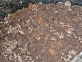 Lombricompostage - vermicomposting (6146469849).jpg