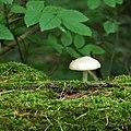 Lonesome Mushroom (75038139).jpeg